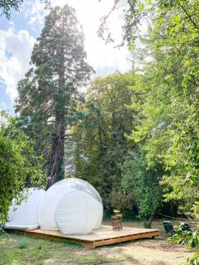 bulle-sequoia (4)