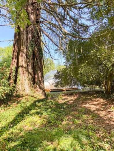 bulle-sequoia (7)